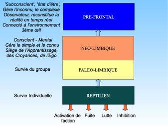 les 4 centres de décision du cerveau humain